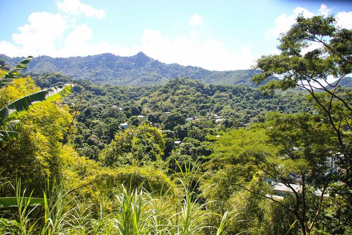Lush mountains in Grenada