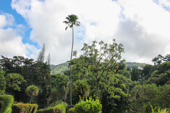 Botanical gardens St Vincent and the Grenadines