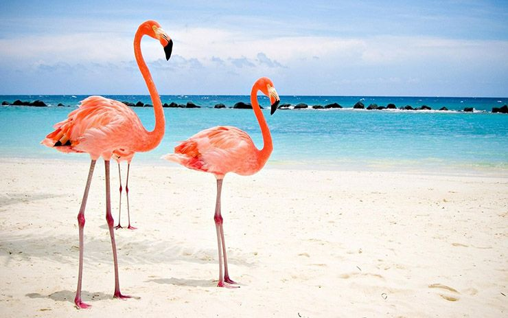 bucket list ideas for families travelling to Aruba with kids to see Flamingo beach