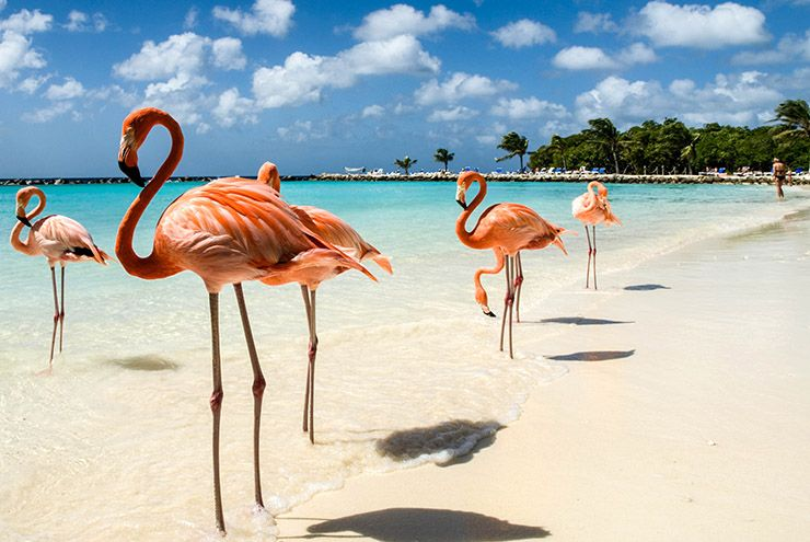 Flamingo Beach Aruba - renaissance island