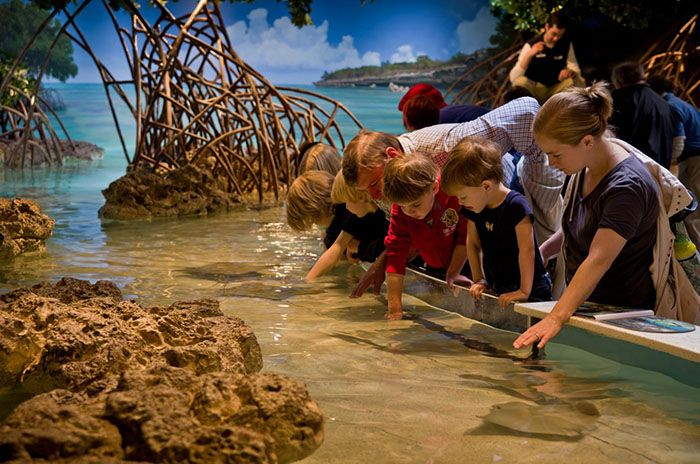Things to do in Boston with Kids at New England Aquarium
