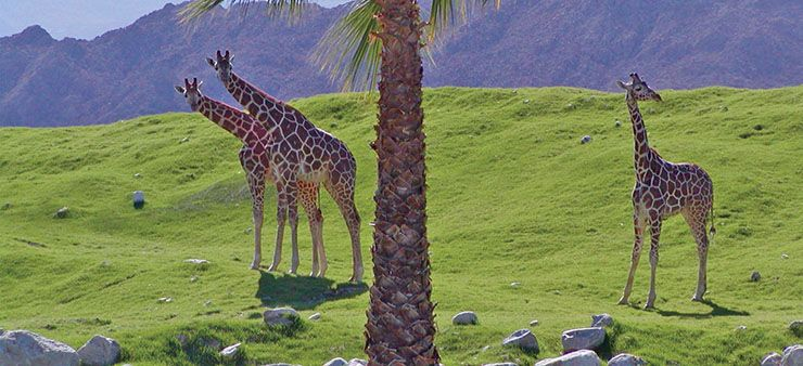 things to do in palm springs with kids - Living desert Palm Springs