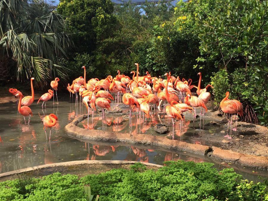 best things to do in Hamilton Bermuda - Aquarium, history museum and zoo