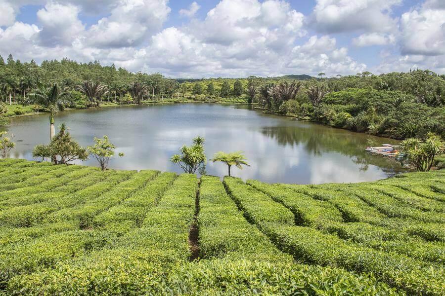 mauritius south island tour itinerary - bois ceri