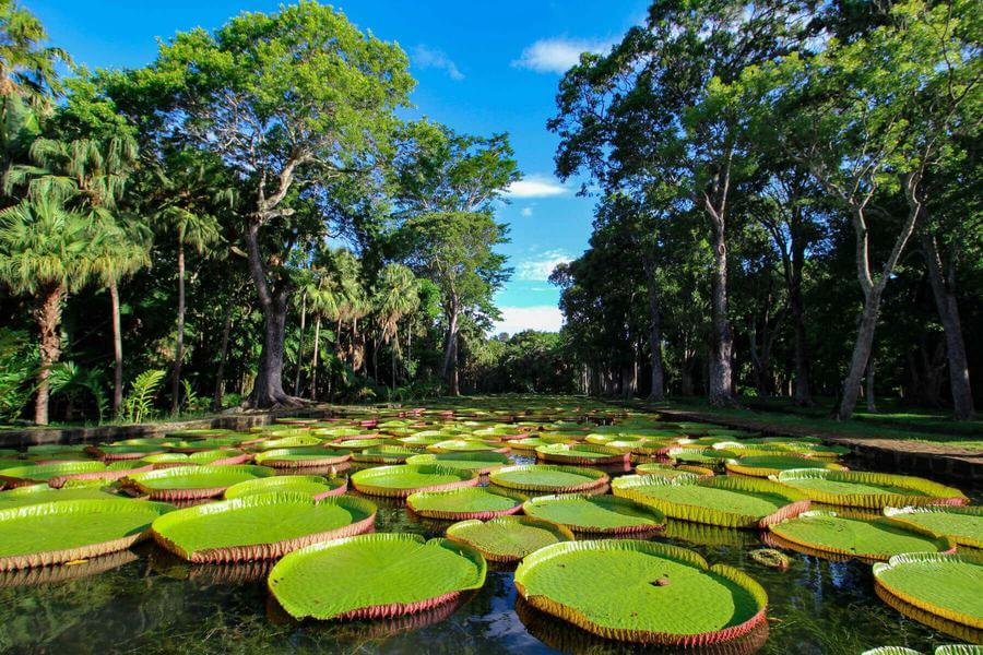instagrammable places in Mauritius - SSR Botanical Gardens
