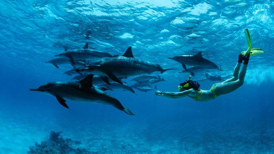 instagrammable places in Mauritius - Swim with Dolphins