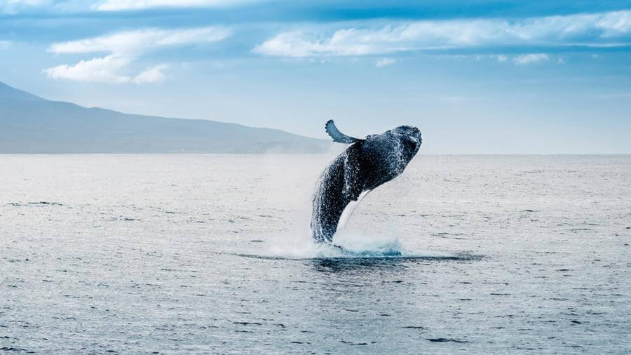 instagrammable places in Mauritius - Whale watching